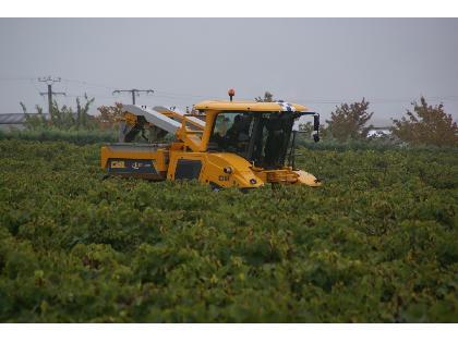 """Cultivadores para Viña Gregoire G8.270 ELITE"""""""