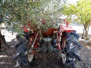 Offers Garden tractors Yanmar paco used