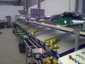 Sales Fruit and Vegetable Sorters Unknown unitec Used