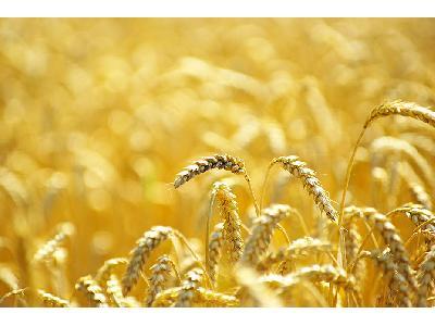 El Gobierno aprueba la distribución de 143,4 millones de euros entre las Comunidades Autónomas para la ejecución de programas agrícolas, ganaderos y de desarrollo rural - 0