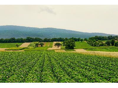 Agricultura sostenible, producir más con menos - 0