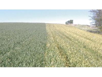 El Ministerio rebajará en 700 euros el coste de las pólizas agrícolas - 0