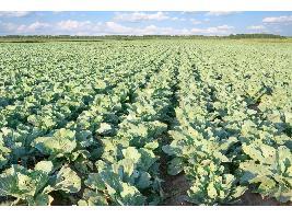 Autorizada la concesión de ayudas a inversiones materiales e inmateriales en transformación, comercialización y desarrollo de productos agrarios para 2019 y 2020