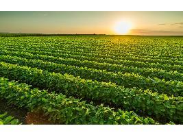 """Luis Planas: """"Si Bruselas quiere una agricultura más sostenible hace falta más dinero"""""""