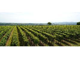Un buen primer trimestre de 2021 marca la recuperación del comercio mundial de vino